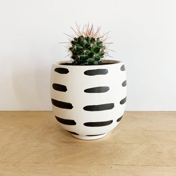Cactus in brush strokes Pot - Gift Delivery Adelaide