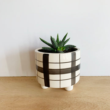 Cactus in White and Black Pot - Adelaide Gift Delivery