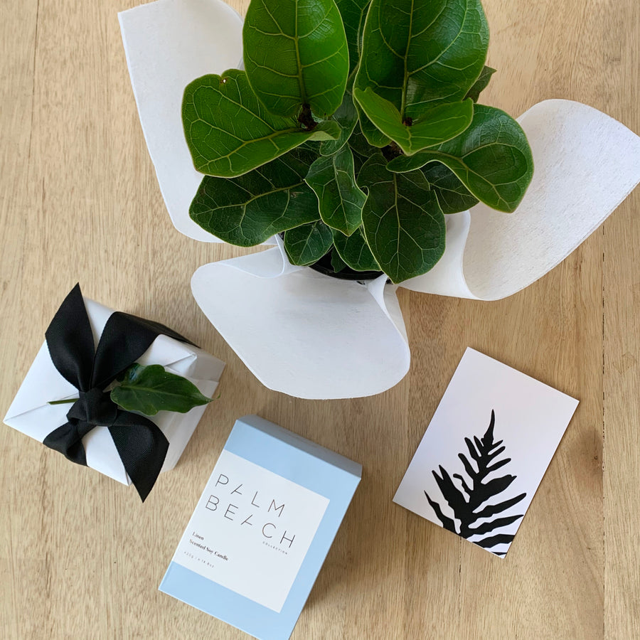 Bambino Ficus Lyrata and Palm Beach Candle Gift Delivery Adelaide