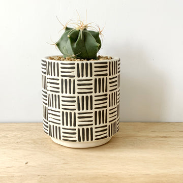 Cactus in Contemporary Pot - Plant Gift Delivery Adelaide
