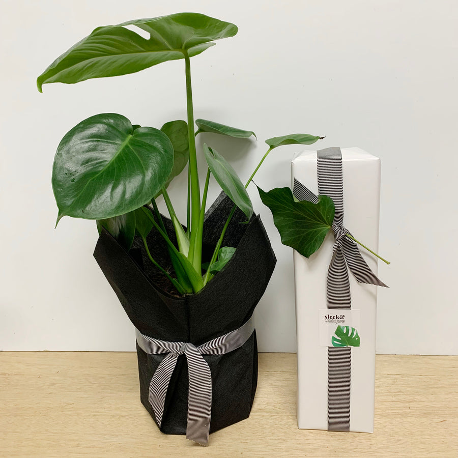 Rose and Monstera Plant Gift Bundle - Sleek and Unique Gifts