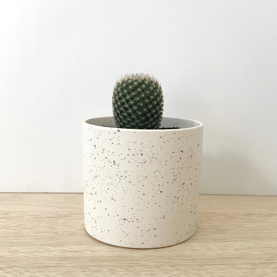 cactus in white speckled pot side view