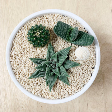 Succulent and Cactus Bowls - Gift Delivery Adelaide