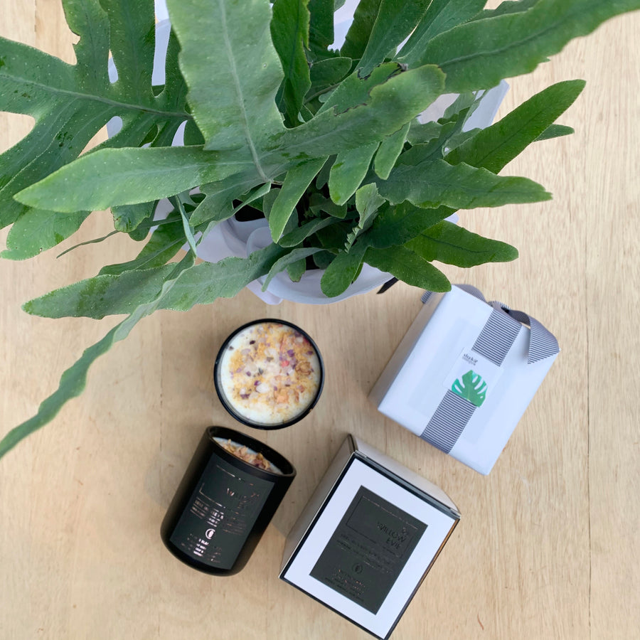 Willow Evie Luxe Candle & Plant  - Adelaide Gift Delivery