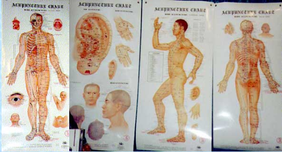 Acupuncture Wall Chart set of 4 Non Laminated