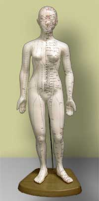 "Medium Human (19"" Woman) Acupuncture Model"