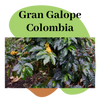 Colombia - Gran Galope
