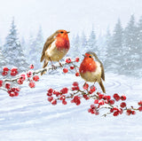 Robin friends Christmas cards