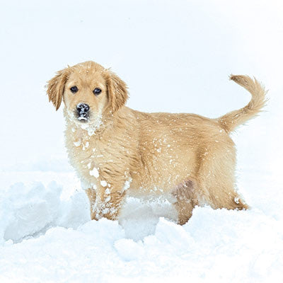 Puppy in the snow Christmas cards