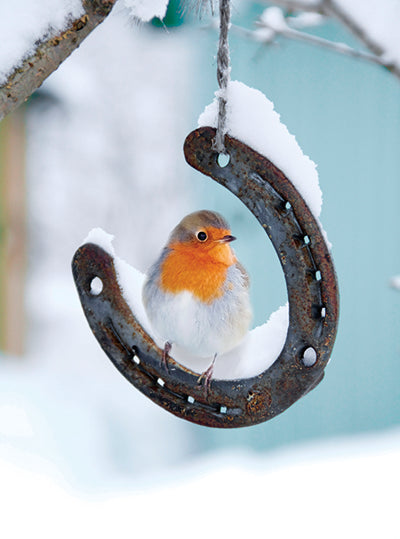 Lucky robin Christmas cards