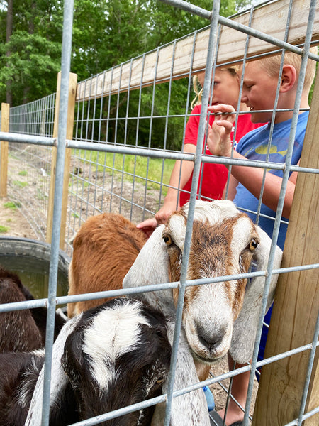 kids at the farm with the animals
