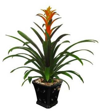 Bromeliad in Glazed Ceramic Planter