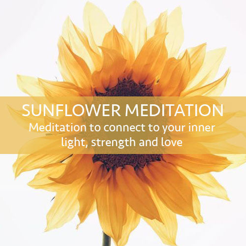 Sunflower Meditation Download