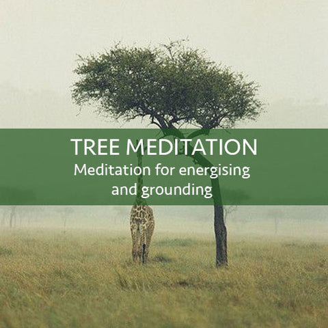 Tree Meditation Download - FREE! (LEVEL 1)