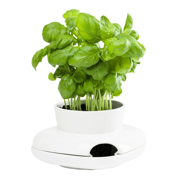 Single Kitchen Farming Pot, White