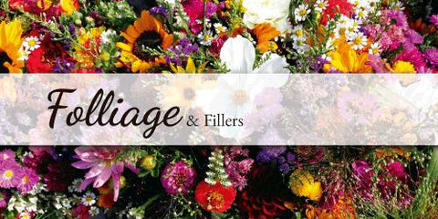 Fillers & Foliage - Flower Type EbloomsDirect