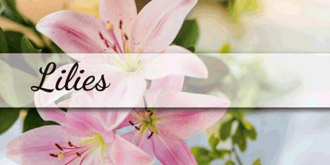 Lilies - EbloomsDirect