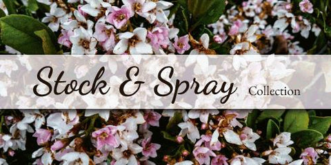 Stock and Spray Stock - Flower Type EbloomsDirect
