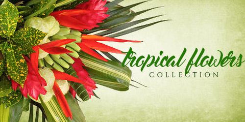 Tropical Flowers bouquets - Eblooms Direct