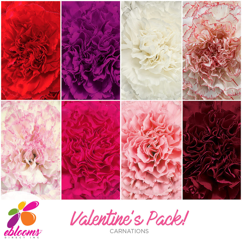 Carnation Valentine's Day Assorted Colors - EbloomsDirect