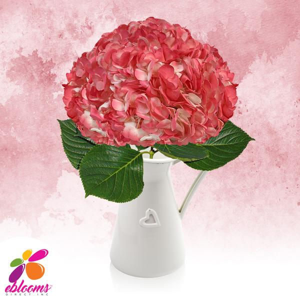 Hydrangea Light Pink Airbrushed