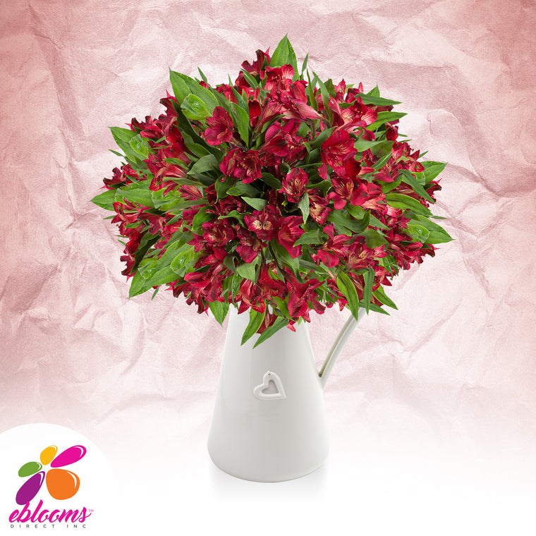 Alstroemeria Red - EbloomsDirect