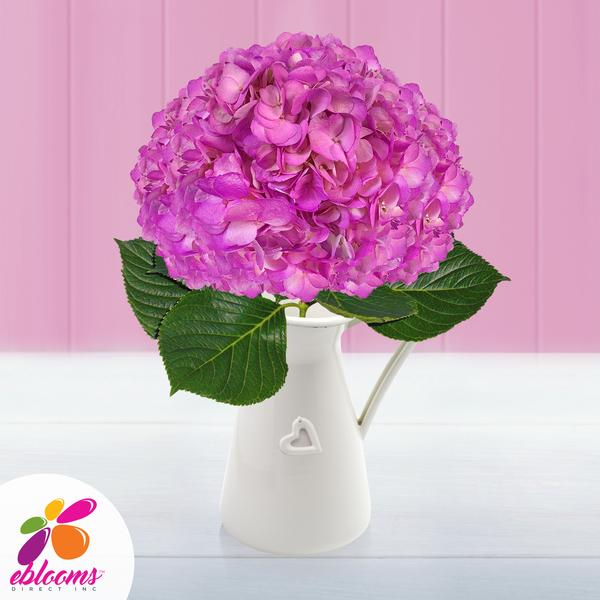 Hydrangea Hot Pink Airbrushed - EbloomsDirect