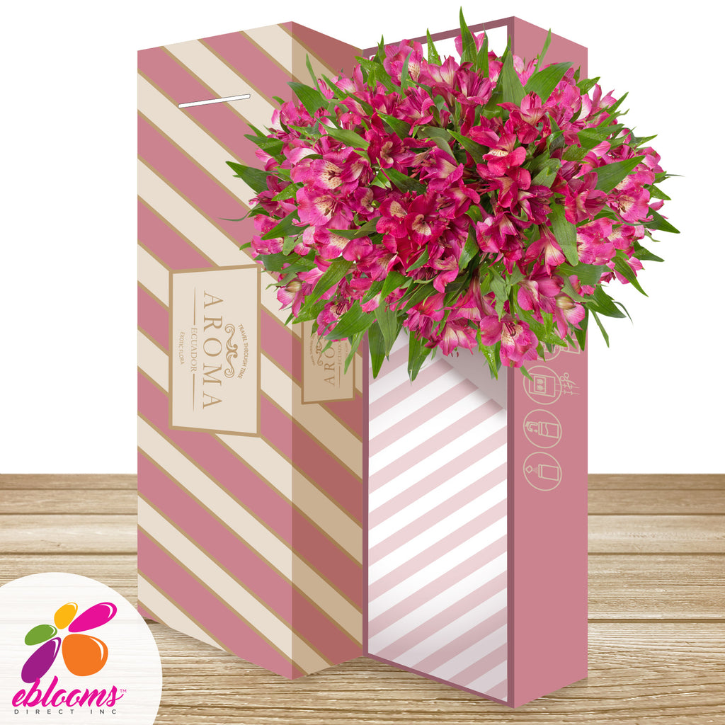 Alstroemeria Hot Pink - EbloomsDirect