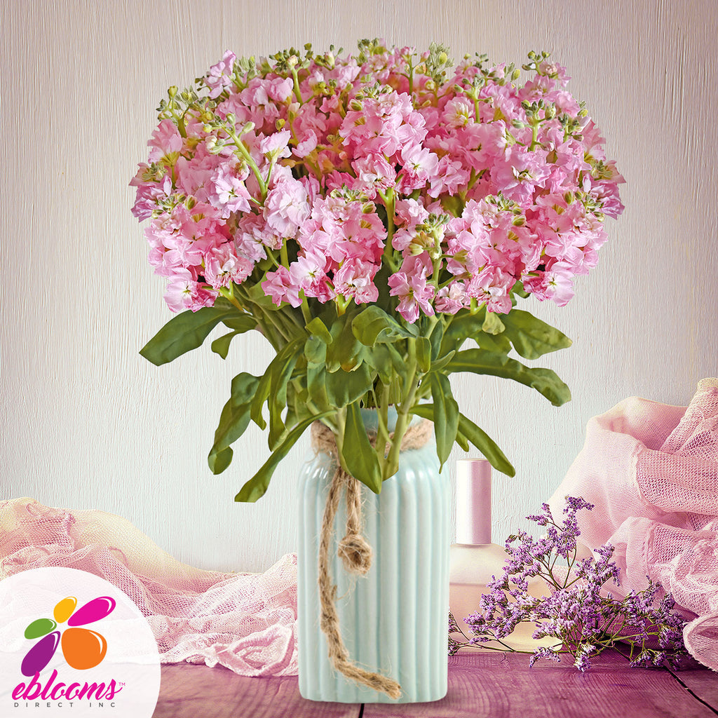 Spray Stock Light Pink Flowers Pack 50 Stems -EbloomsDirect