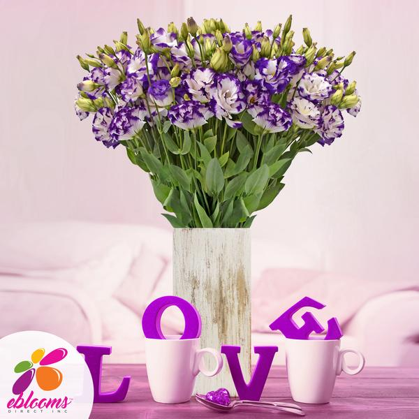 Lisianthus Extra Bicolor Purple 80 stem pack 70cm - EbloomsDirect