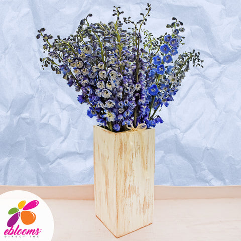 Delphinium Blue Pacific Benary - EbloomsDirect