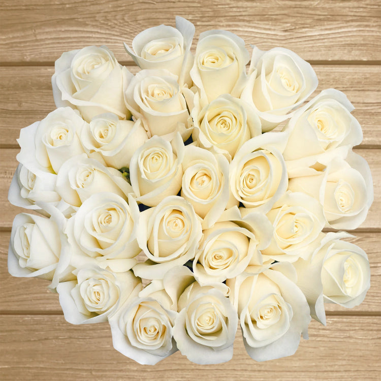 Roses Cream 50cm - EbloomsDirect