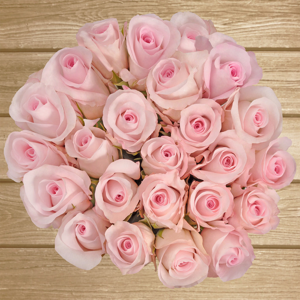 Roses Light Pink - EbloomsDirect - Farm Fresh Weddings & Events 2019-2020✔