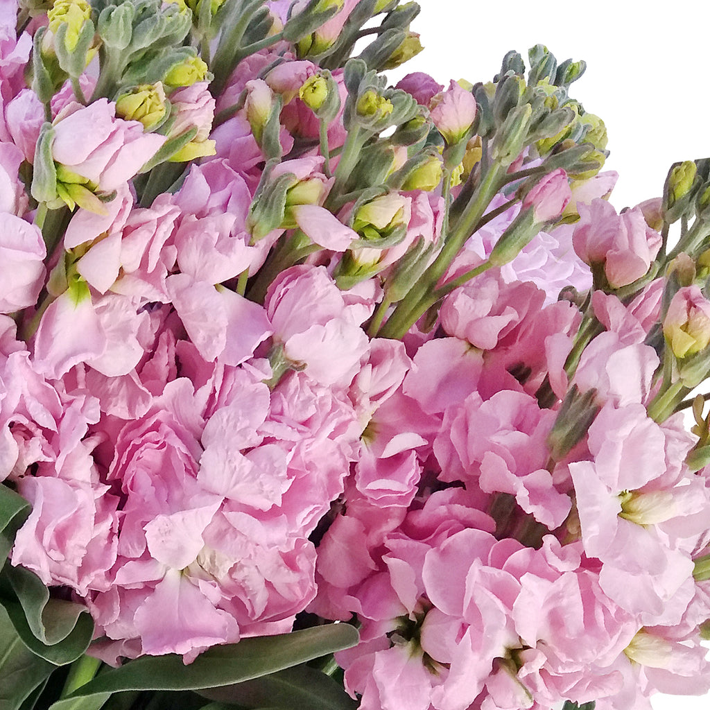 Stock Light Pink Flowers Pack 80 Stems -EbloomsDirect