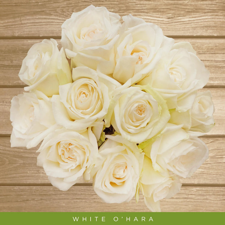 Garden Rose White O'hara  - EbloomsDirect
