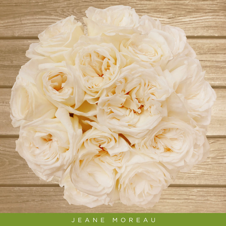True White Garden Rose -  Jeane  Moreau - EbloomsDirect