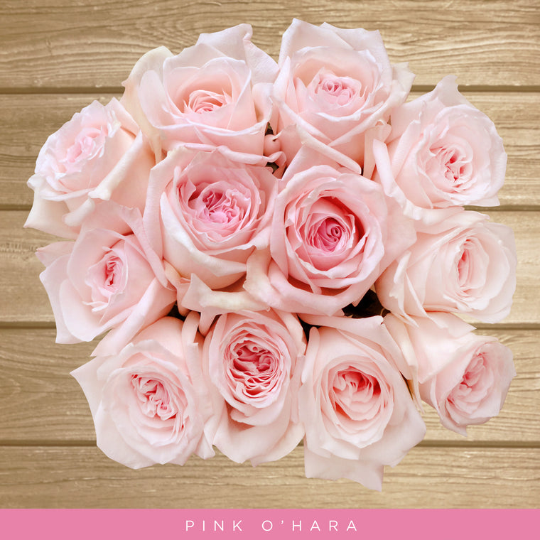 Garden Roses Pink O'hara Light Pink - EbloomsDirect
