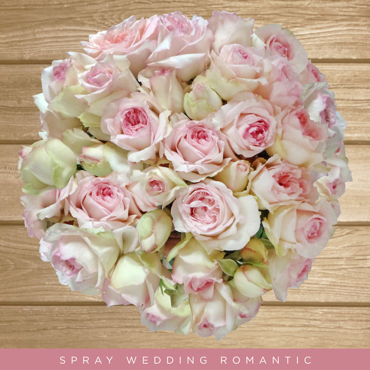 Garden Spray Roses Blush Pink - Wedding Romantica - EbloomsDirect