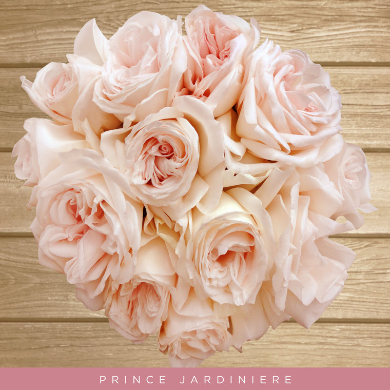 Garden Rose Blush - EbloomsDirect