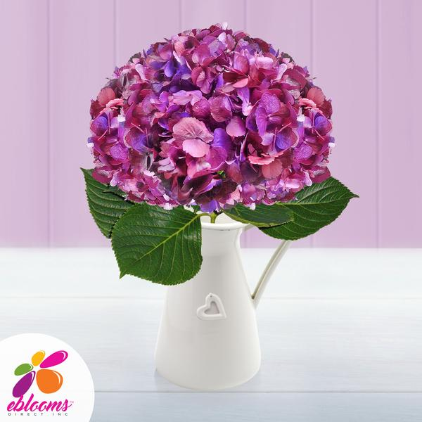 Hydrangea Plum Antique Purple Airbrushed