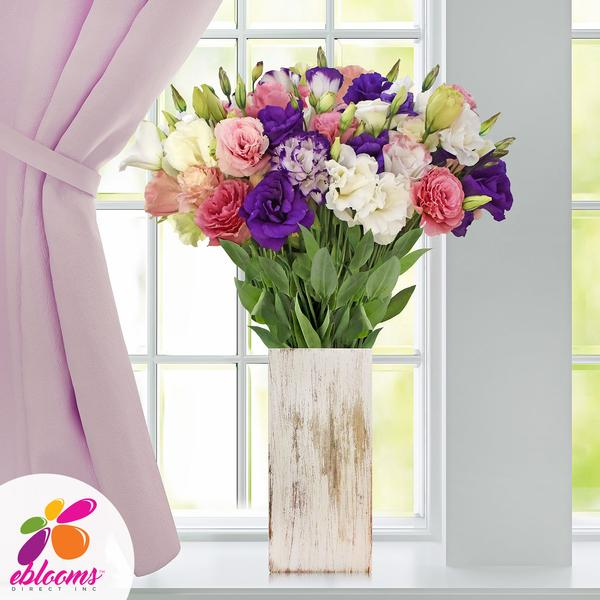 Lisianthus Extra Assorted 80 stem pack 70cm - EbloomsDirect