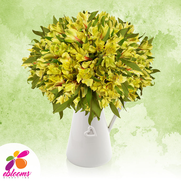 Alstroemeria Yellow - EbloomsDirect
