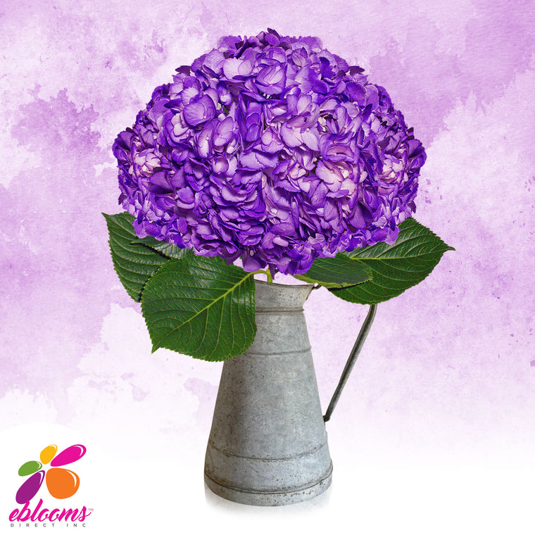 Hydrangea Purple Airbrushed Just for Halloween - EbloomsDirect