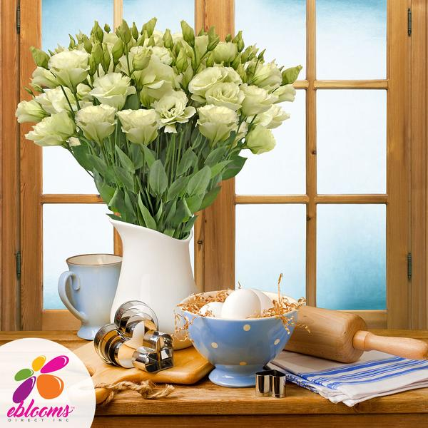 Lisianthus Extra Green 80 stem pack 70cm - EbloomsDirect