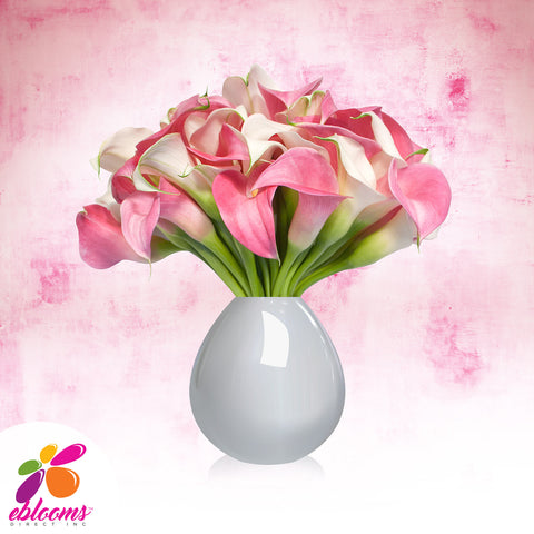 Mini Callas White and Pink Pack 80 Stems