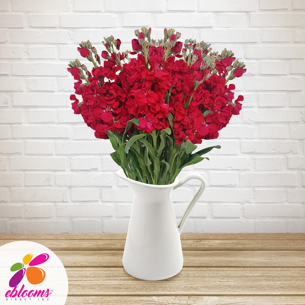 Stock Red Ruby Flowers Pack 80 Stems -EbloomsDirect