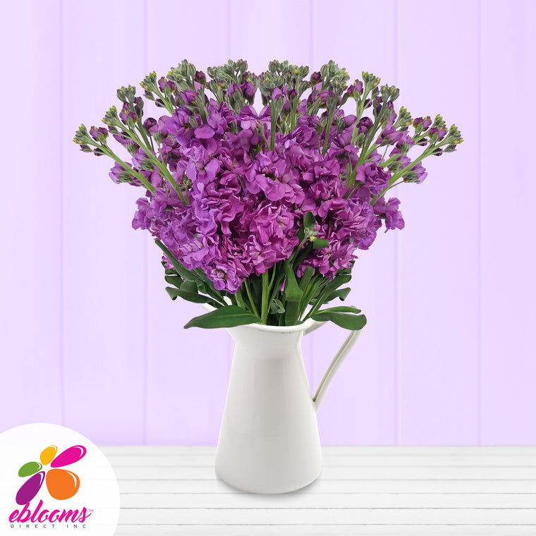 Stock Purple Flowers Pack 80 Stems -EbloomsDirect
