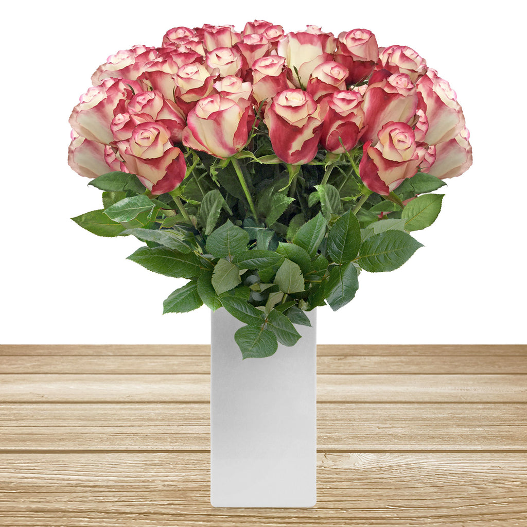Roses Bicolor White and Red 60 cm Long Stem Pack 100 stems -  EbloomsDirect