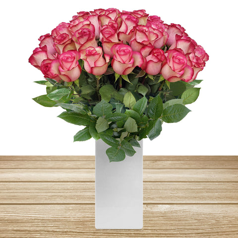 Roses Bicolor White & Pink 60cm Long Stems Pack 100 Stems - Ebloomsdirect