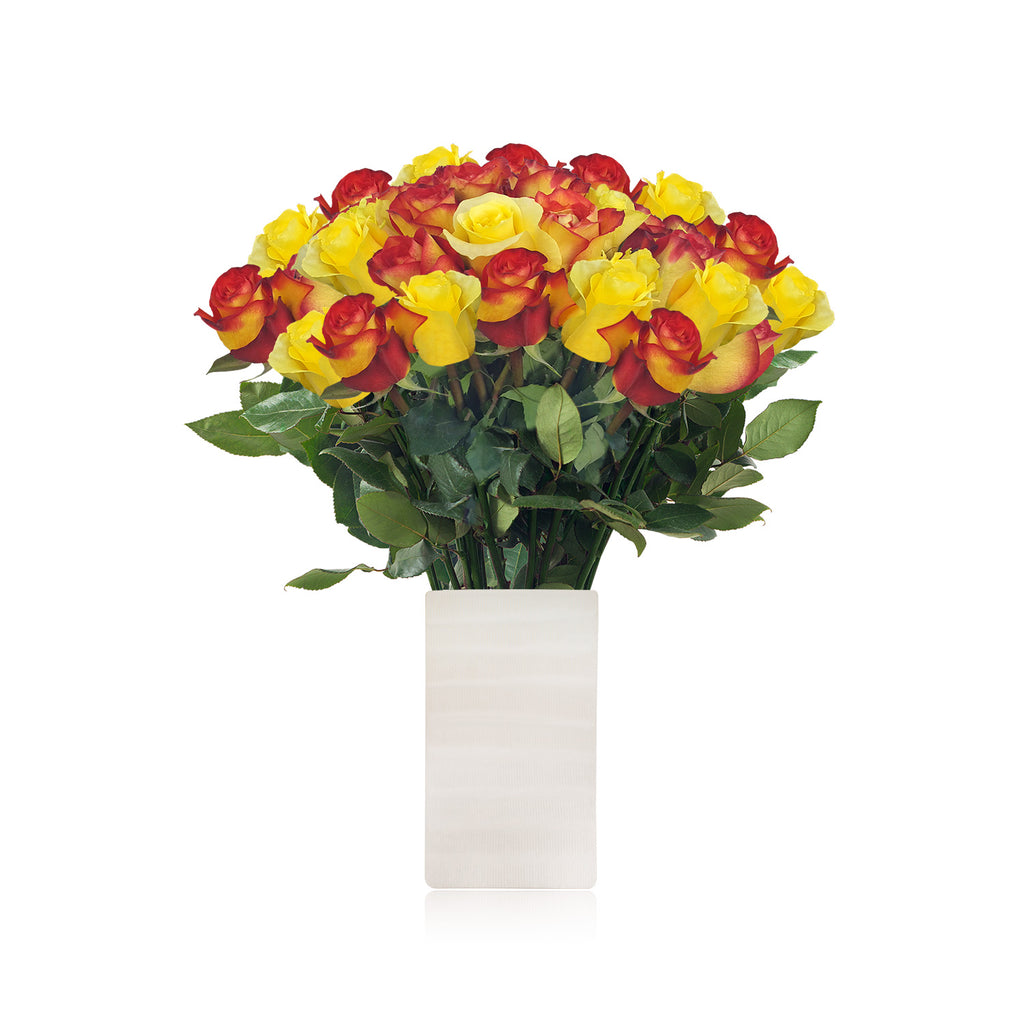 Love in a box 50 Roses Yellow & Bicolor Orange 50cm - Vase Included- EbloomsDirect